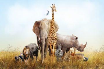 coronavirus-(covid-19)-:-l'aide-financiere-pour-les-cirques-animaliers-est-doublee-!